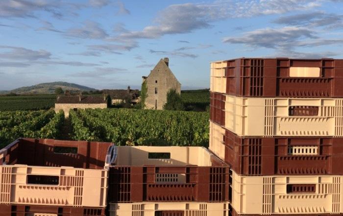 Maison Pierre Brisset : Vendanges 2020 Chassagne Montrachet